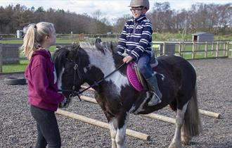 Own a pony day at Matlock Farm Park
